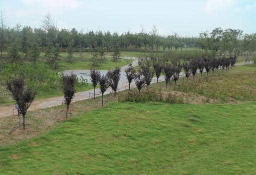 梅河支流生态修复绿化工程